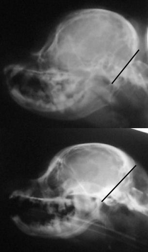 skull xrays back skull comparison and lines